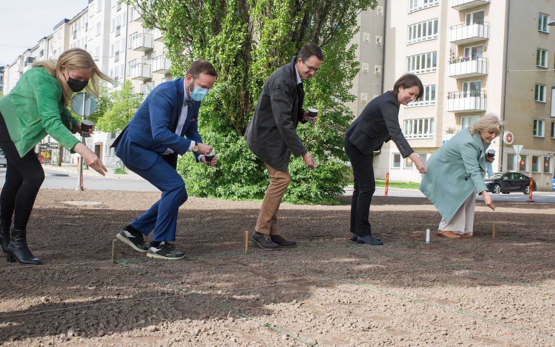 Stockholm receives its first pollinator friendly roundabout